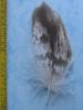 B Seeadler 102