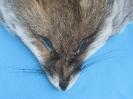 Fuchs-Maske Rotfuchs