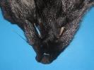 Fuchs-Maske Silber-Fuchs