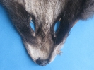 Marderhund-Maske